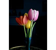 Candy Coloured Tulips (#1) Photographic Print
