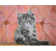 Relaxing Kitten Photographic Print