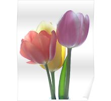 CANDY COLOURED TULIPS (#2) Poster