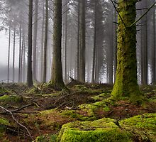 Approaching Mist by AndyCosway