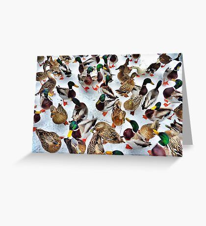 Surrounded  Greeting Card