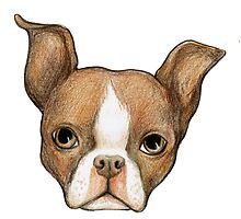 Brown Boston Terrier by zauxie