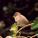 Sparrow by Barry W  King