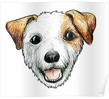 Jack Russell Terrier Poster
