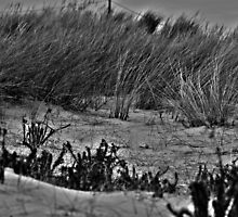 Beach Dunes - West Wittering Dunes by James Price