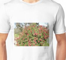 Kunzia Baxteri Australian Native bottle brush. Spring! Unisex T-Shirt