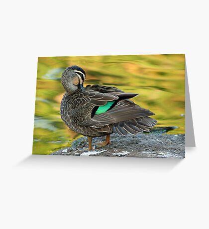 Duck Preening Greeting Card