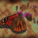 The Monarch of Thistles by vigor
