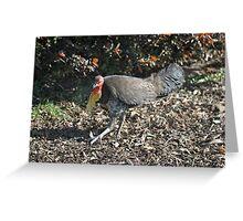 Scrub Turkey Greeting Card
