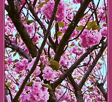 Double Cherry Blossom Spring by Carol F. Austin