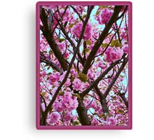 Double Cherry Blossom Spring Canvas Print