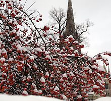 Brrrr..erry  cold by Mark R Bowman