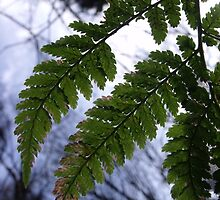green fern, blue sky - northern ireland by isuckink