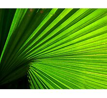 green rays Photographic Print