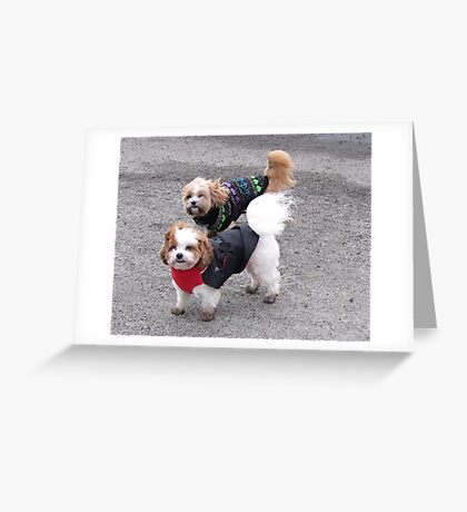 Stormy Weather Guys Greeting Card