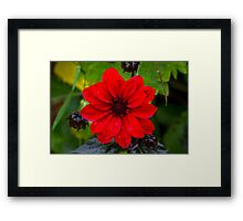Rain On Flower Framed Print