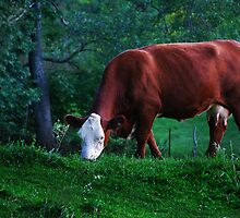 Pastoral Scene by Laurie Minor