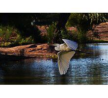Composite Egret Photographic Print