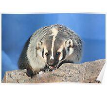 Badger (2) Poster