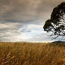 Bungendore NSW - Storm rolling in by Robert Chester Lee