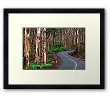 South West Australia - Boranup Forrest - Margaret River Framed Print
