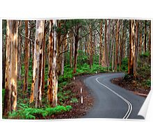 South West Australia - Boranup Forrest - Margaret River Poster