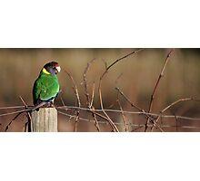 South West Australia - Margaret River Vineyard Photographic Print
