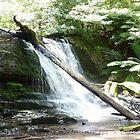 Lower Level Lilydale Falls, Lilydale, Tasmania by RainbowWomanTas