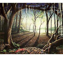 Flood Plain Forest - A fantasy landscape Photographic Print