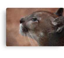 Florida panther  Canvas Print