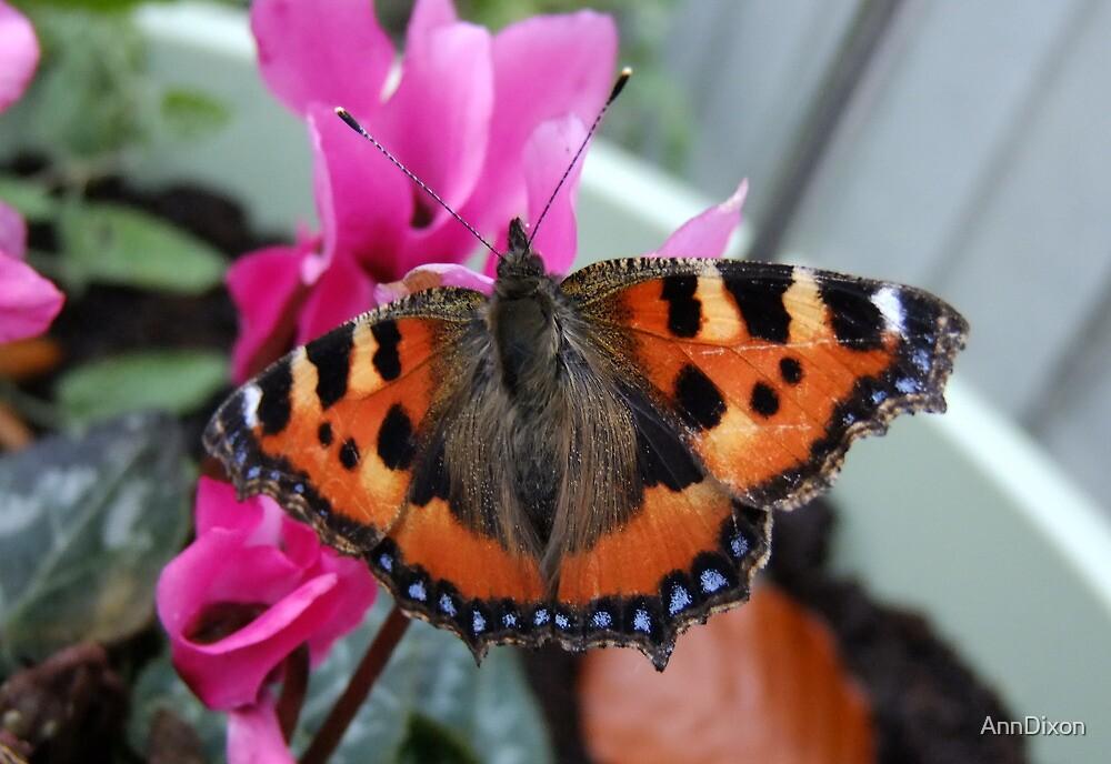 Small Tortoiseshell Butterfly by AnnDixon