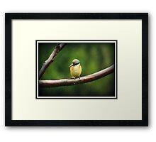 Sacred Kingfisher in the Rain Framed Print