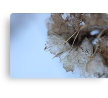 Winter Hydrangea  - JUSTART © Canvas Print