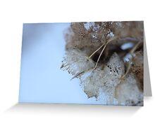Winter Hydrangea  - JUSTART © Greeting Card