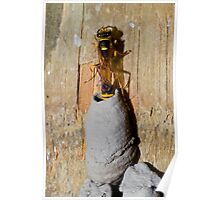 Potter Wasp Poster