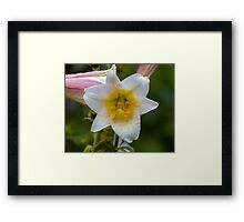 Yellow On White Framed Print