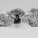 Barney in the snow!!! by poohsmate