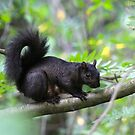 Squirrel momma... by RichImage