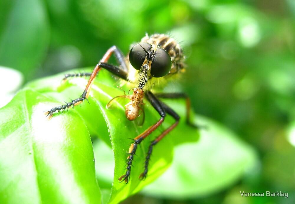 Bug Eat Bug by Vanessa Barklay