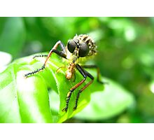 Bug Eat Bug Photographic Print