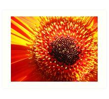 Red Orange Bloom  Art Print