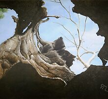 'Hollow' - View from inside a Hollow Tree SA by Eyes-of-Sol