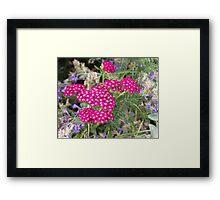 Tiny vibrant deep pink blossoms Framed Print