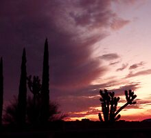 Sunset Cactus by Charmiene Maxwell-batten