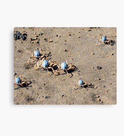 Blue Soldier Crabs Canvas Print