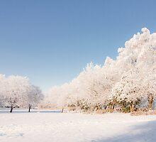 Belhaven Park winterscape by Andrew Littlejohn