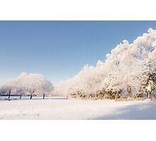 Belhaven Park winterscape Photographic Print