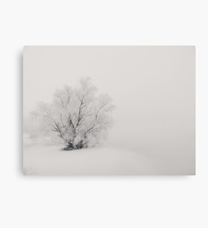 Frozen tree in the middle of nowhere Canvas Print