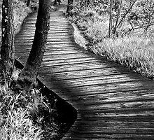 New Lanark Walk by Andrew Littlejohn
