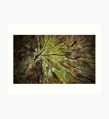Tree Stump Art Print